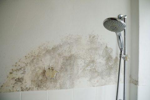Humidade nas paredes